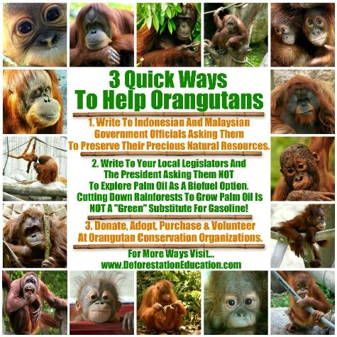 Image result for world orangutan day