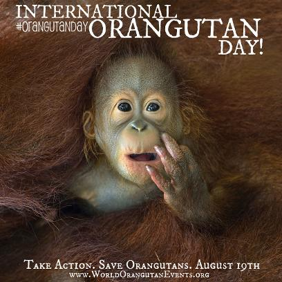 International Orangutan Day #OrangutanDay August 19th